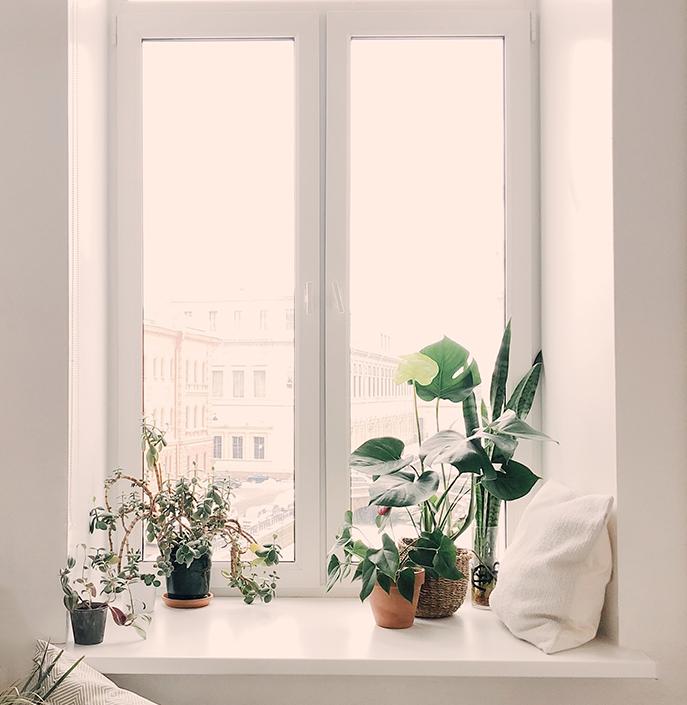 Tropical Plants in Bay Window